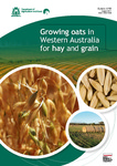 Growing oats in Western Australia for hay and grain