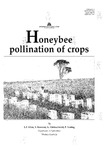 Honeybee pollination of crops