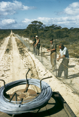 1950's - 1960's construction of the Rabbit Proof Fence (now State Barrier Fence)