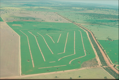Aerial view of alley farming, west Midlands, Western Australia